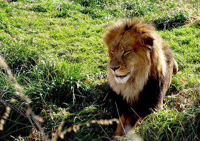 Denver Zoo 1108 (2)