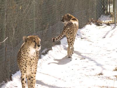 CO 2011 Denver Zoo 01 1