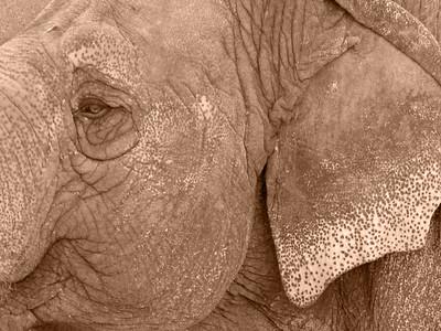 Denver Zoo 1108 (55) sepia