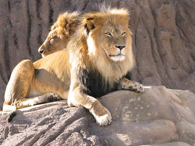 CO 2010 01 Denver Zoo (18)