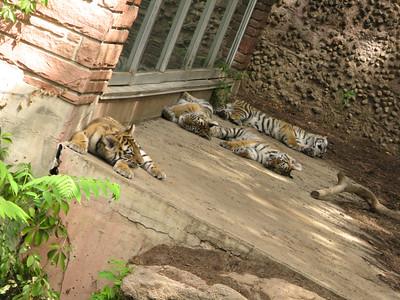 CO 2010 09 Denver Zoo 118