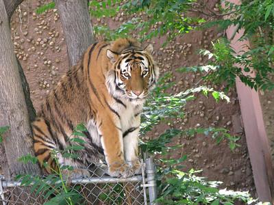 CO 2009 Denver Zoo 0615 (13)