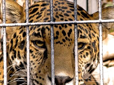 Denver Zoo 1108 (16)