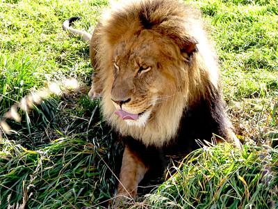 Denver Zoo 1108 (3)