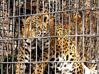Denver Zoo 1108 (21)