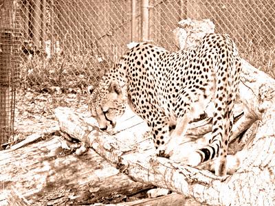 Denver Zoo 1108 (82) sepia