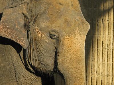 Denver Zoo 1108 (51)
