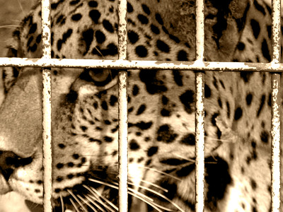 Denver Zoo 1108 (18) sepia