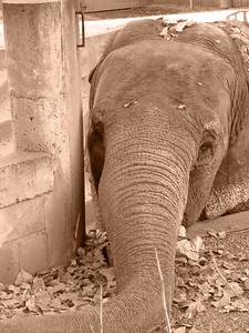 Denver Zoo 1108 (57) sepia