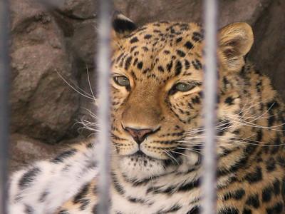CO 2010 01 Denver Zoo (34)