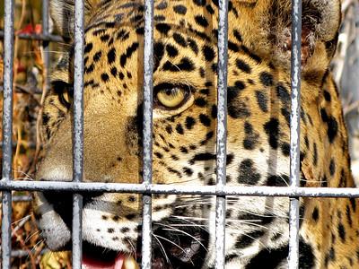 Denver Zoo 1108 (19)