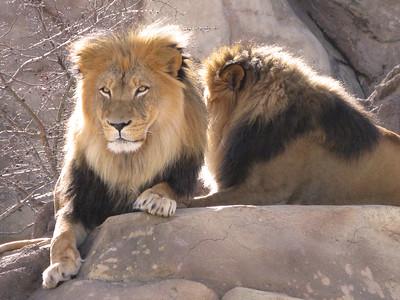 CO 2010 01 Denver Zoo (16)