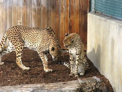 CO 2010 01 Denver Zoo (6)