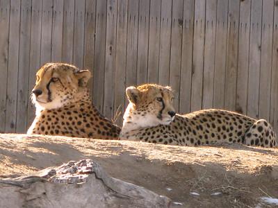 CO 2011 Denver Zoo 01 32