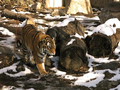 CO 2010 01 Denver Zoo (33)