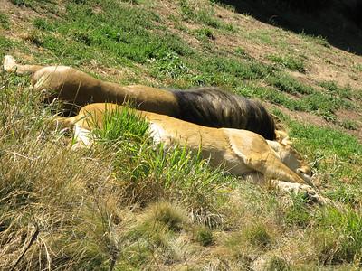 CO 2010 09 Denver Zoo 7