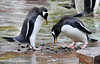 Penguins - Edinburgh Zoo
