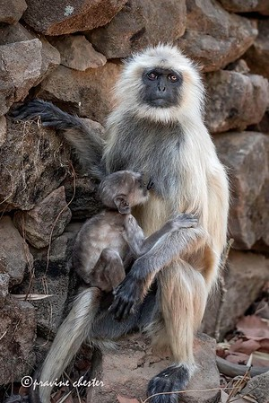 Mother and her infant