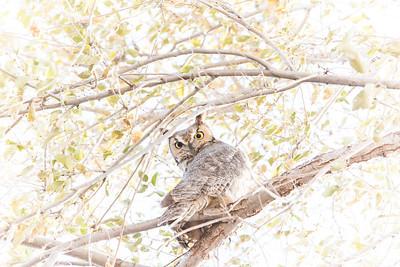 Owl Perches