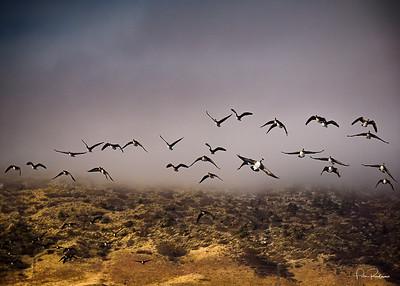 The Birds of Trailmark