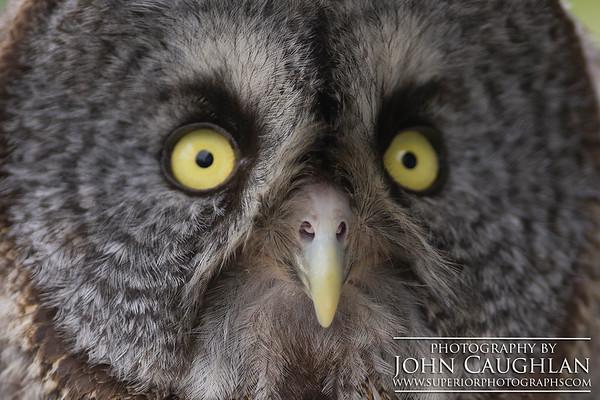 Owl1d