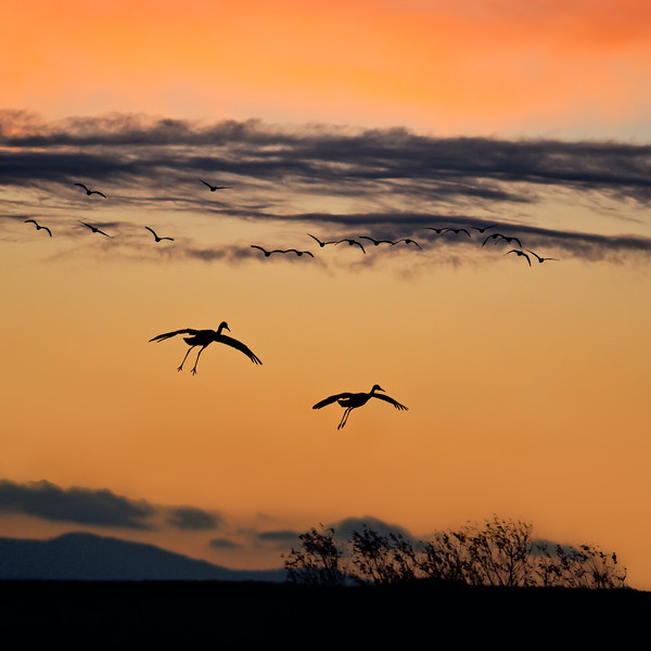 A Symphony of Sunset Silhouettes