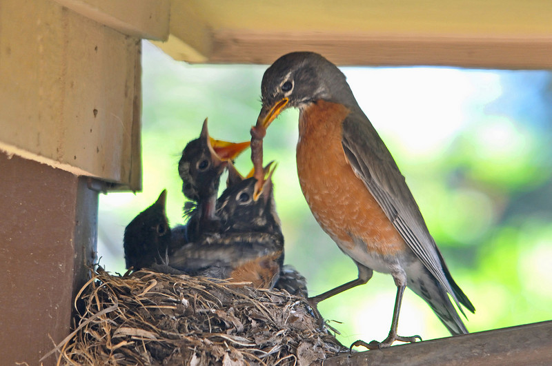 194 - Lunch for Robins, Colorado