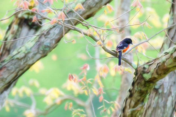 July 7 - Spring Song Bird