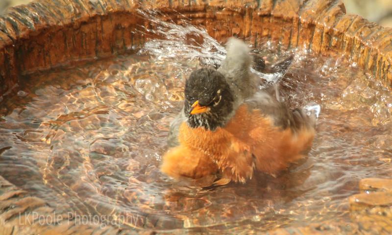 Splish, Splash, Taking a Bath