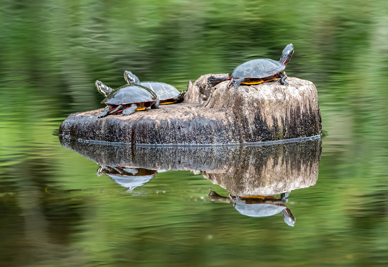 Turtle Reflection 9/27/16