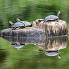 Turtle Reflection 9/27/16
