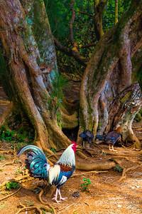 Oahu, Hawaii, USA  Canon EOS 6D w/ EF24-105mm f/4L IS USM: 70mm @ ¹⁄₃₂₀ sec, f/9, ISO 400