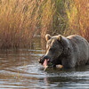 Katmai National Park | Brooks River | Alaska