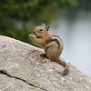 112 - Chipmunk, Bear Lake, RMNP