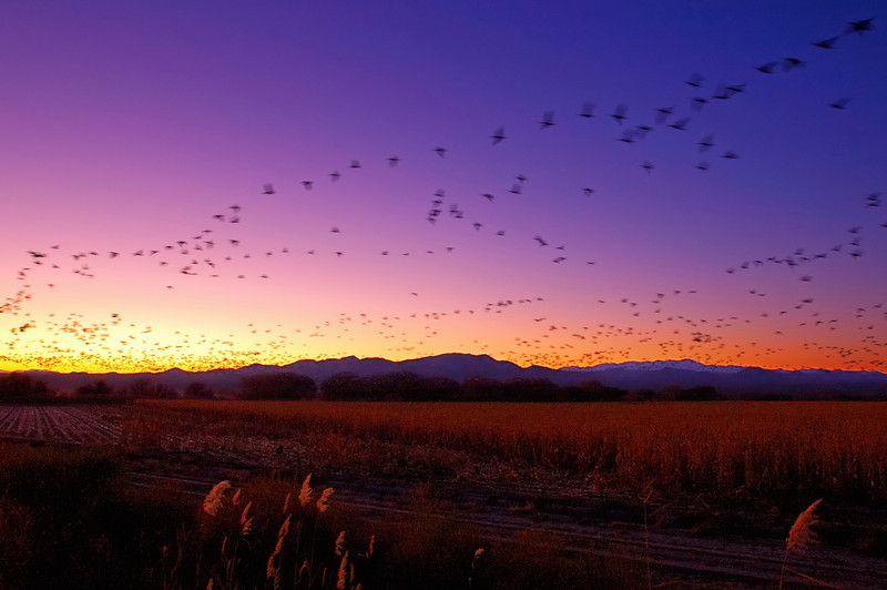 Bosque Sunset Flock in Motion