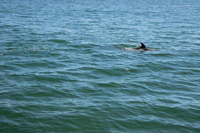 Dolphins-013