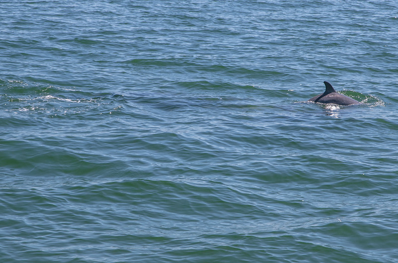 Dolphins-012