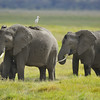 Elephants Going to the Watering Hole, Kenya, East Africa