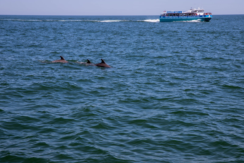 Dolphins-032