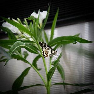 Tropical Butterfly_2