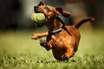 Annie gets her ball