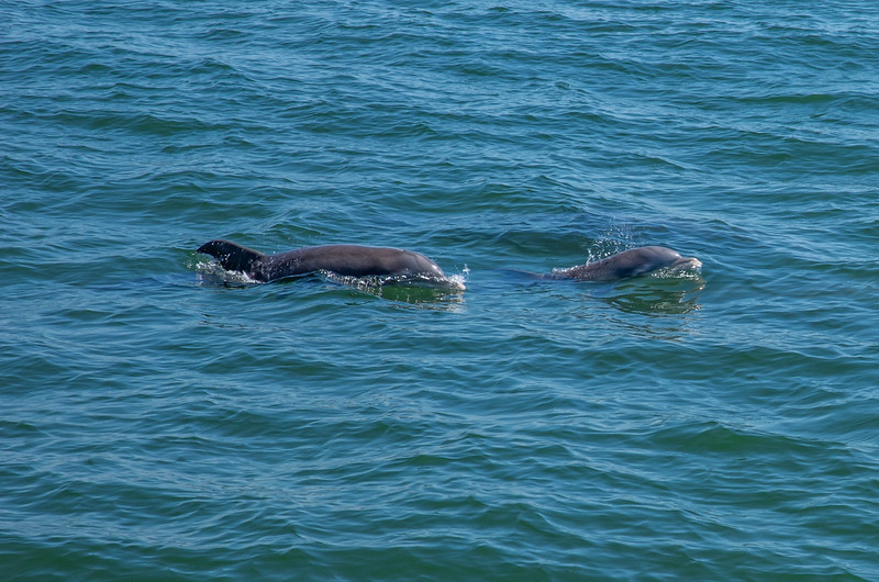 Dolphins-008