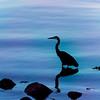 Heron_10-1