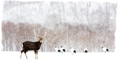 Deer in Snow Storm