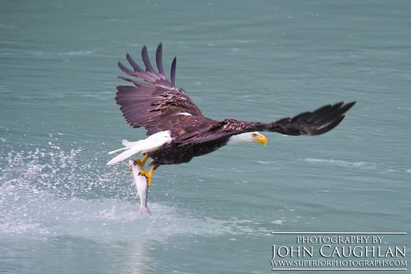 Eagle2o