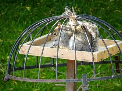 Squirrel On Bird Table