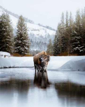 Frozen Beast
