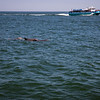 Dolphins-031