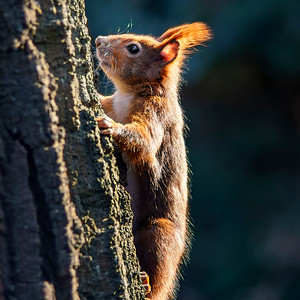 Squirrel in the spring sun