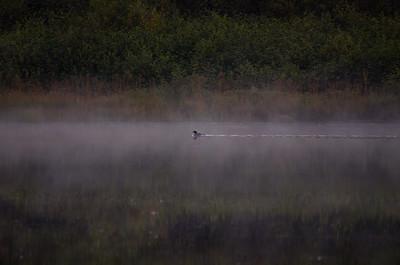 Through the Morning Mist